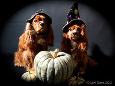 #Howloween dogs Lucky and Sparky from Lani B.