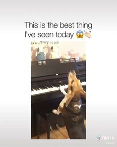 cbd for the dogs! Cute Funny Dogs, Funny Dog Memes, Crazy Funny Memes, Really Funny Memes, Funny Video Memes, Cute Funny Animals, Cute Animal Memes, Cute Animal Videos, Funny Animal Pictures