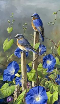 (100) Suzy Grange - Google+ - Morning Glory and Bluebirds