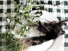 "How to Make ""kokedama"" string garden String Garden, Bonsai Soil, Bonsai Plants, Indoor Garden, Indoor Plants, Air Plants, Plant Experiments, Compost, Vegetable Gardening"