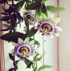 Kravleplante med eksotiske blomster.