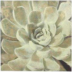 inspiration for creating my own wall art :: Pier 1 Succulent Art