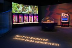 "View of the Machine Inside: Biomechanics exhibition, showing a case of shells, a wall projection of snails in grass, and the words ""Built to Survive"" projected on the floor in the foreground. Survival, Snails, Exhibitions, Amazing, Grass, Travelling, Projects, Fun, Floor"