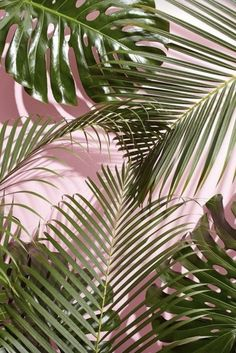 Imagine wallpaper, pink, and plants