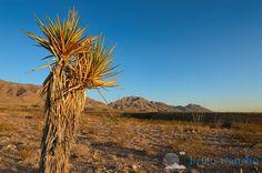 17 Best El Paso Texas Images El Paso Texas