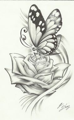 butterfly pencil drawing, if it were a dragonfly it would be perfect
