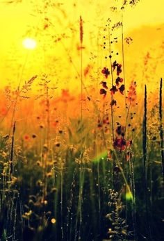 Wildflower Sunset, Burgundy, France This is beautiful, i would love to paint this! Beautiful World, Beautiful Places, Beautiful Gorgeous, Beautiful Sunset, Simply Beautiful, Beautiful Moments, All Nature, Jolie Photo, Mellow Yellow