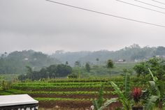 Panorama Alam sekitar Saluran Pengatur Debit Air PLTA