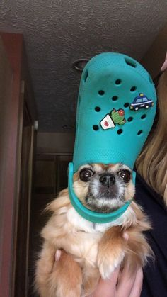His Holiness The Pope: Pets With Crocs Hats – l seybold - Baby Animals Funny Dog Memes, Funny Animal Memes, Cute Funny Animals, Cute Baby Animals, Funny Dogs, Girl Pet Names, Stop Dog Barking, Silly Dogs, Cute Dogs Breeds