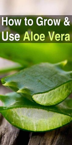 If you're interested in growing medicinal plants at home, the first plant you should start with is aloe vera. It's easy to grow and has lots of uses. #aloe #aloevera #homeremedies