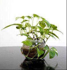 Φυτά που μεγαλώνουν στο νερό χωρίς κόπο - Eikones & Psithyroi Glass Vase, Home Decor, Decoration Home, Room Decor, Home Interior Design, Home Decoration, Interior Design