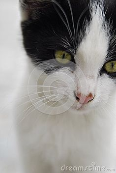 Black and white cat green eyes
