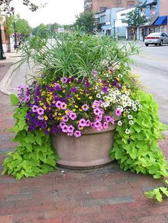 Container planted with petunia, verbena, million bells, potato vine and at the center of everything King Tut's grass (papyrus).... stunning.