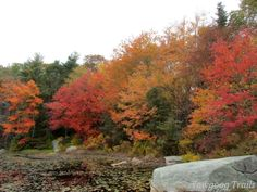 Fall foliage at Thrush Cove on Wincheck Pond at Camp #Yawgoog!  A 2015 image by David R. Brierley.