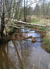 Vasavere jõgi