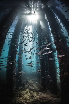 "vxpo: "" ""Towards The Light by Robert Rath 