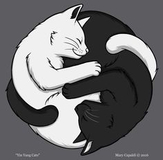 'Yin Yang Katzen' T-Shirt von Mary Capaldi Illustration Inspiration, Illustration Art, Illustrations, Cat Drawing, Manga Drawing, Yin Yang Art, Cat Tattoo Designs, Crazy Cats, Animal Drawings