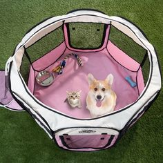 Petmaker Portable Pop-Up Dog Playpen with Carrying Bag : Target Cute Baby Animals, Funny Animals, Cute Puppies, Dogs And Puppies, Havanese Puppies, Maltipoo, Goldendoodle, Dog Playpen, Pet Kennels