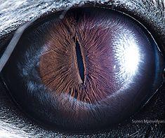 Animal Eyes 2 by Suren Manvelyan