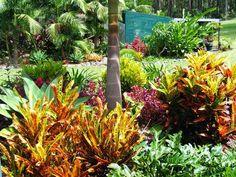 Australian gardening cubit: sub tropical gardening forum: Plants for a sub tropical climate