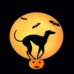 Greyhound pumpkin carving stencil