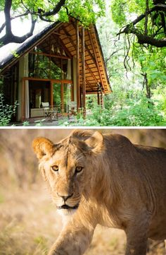 Tambotie Forest Lodge offers an exclusive and spectacular stay in the North West for families wanting to experience the Big 5 in style. Family Getaways, Big 5, Lodges, North West, South Africa, Families, Lion, Explore, Animals