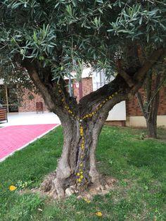 The smug tree