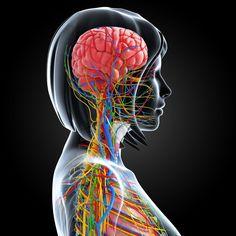 Too Many Nerves: New Pathology Discovered in Fibromyalgia