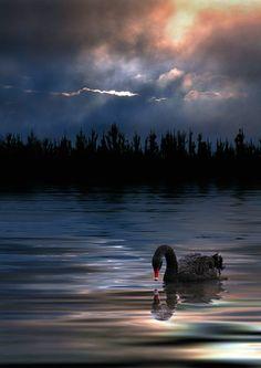 rosiedreams • maya47000: Inner soul by Sue Kane