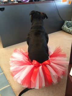 Valentine's Day Tutu for Dogs in Red and White with Red Bow, via Etsy.