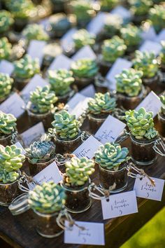 Love these succulent wedding favors. Plus, they practically impossible to kill, hardly need any water, and they're adorable.