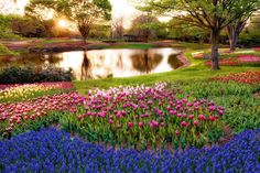 HQ Wallpapers Plus provides different size of Spring Trees And Flowers Hd Photos. You can easily to download high quality wallpapers in widescreen for your desktop.