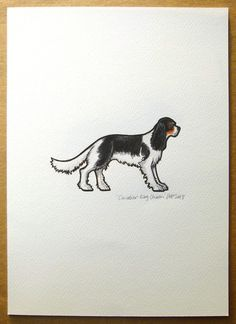 This is a print of an original watercolour of a beautiful Cavalier King Charles Spaniel, handpainted by myself.  It is a digital reproduction of an original watercolour painting and is printed on 190g/m² mould-made watercolour Bockingford paper with archival pigment inks. The paper is textured, giving the print the look and feel of an original watercolour.  The paper is A4 ( 8.3 x 11.7 inches) in dimensions, with a printed area of approx. 5 x 4 inches. This allows you to mount or trim th...