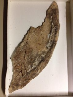 Twitter / DrDanaEhret: It's #FossilFriday ! Here's ...