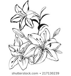 Black and white flower, lily, hand drawn Illustrations, Silk Painting, White Flowers, Coloring Pages, Elsa, Stencils, Diy And Crafts, How To Draw Hands, Images