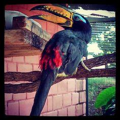 """""""Pássaros"""" por @ jessicasrod92"""