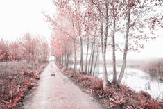 """""""Magical infrared light"""" by nelson garrido silva - Forest Light, Magical Forest, Light Images, Us Images, Lit Captions, Plant Images, Colorful Plants, Nyc, Water Reflections"""