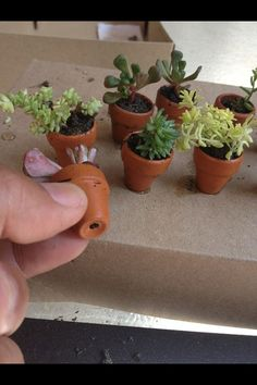 Miniature Fairy Garden real sedum plants in clay: 3.50