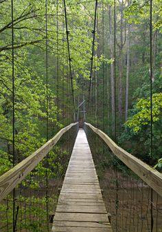 Transition- Red River Gorge Suspension bridge