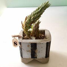 Macetero de 8 x 8 cms. de cemento pintado a mano y envejecido. Para cactus o plantas pequeñas. Fabricado con un molde de alimentación enteral reciclado. Se puede personalizar con cualquier color o dejarlo en el cemento natural.