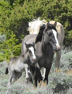 Such beautiful horses