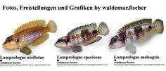 Aquaristik Fotos, Freistellungen und Grafiken by waldemar.fischer