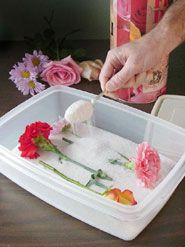Drying Flowers with Silica Sand Drying Flowers with Silica Sand Cute Crafts, Diy Crafts, Drying Flowers, Birthday Gift Cards, Dried Flower Arrangements, Hydrangea Not Blooming, Forever Flowers, Pressed Flower Art, How To Preserve Flowers