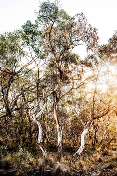 Image of Limited Release Bridle Track Photographic Print Kara Rosenlund Wall Art Prints, Fine Art Prints, Kara Rosenlund, Australian Bush, Photographic Prints, Large Prints, Images, Just For You, In This Moment