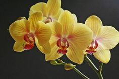 Generally, Yellow flowers are the indication for happiness. The American horticulturist and botanist spoke about his personal experience. He......