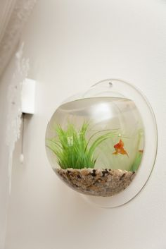 Aquarium in the wall = Coolest pet ever!