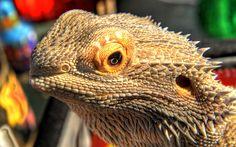 great lizards