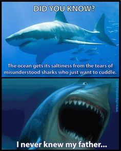Shark Problems   Read More Funny:    http://wdb.es?utm_campaign=wdb.es&utm_medium=pinterest&utm_source=pinterst-description&utm_content=&utm_term=