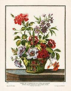 Botanical Prints + Natural History Prints from StudioBotanika Antique Prints, Chrysanthemum, Carnations, Botanical Prints, Natural History, Hibiscus, Embroidery Patterns, Flower Baskets, Etchings