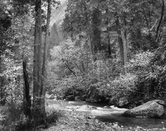 Tenaya Creek, Dogwood, Rain by Ansel Adams